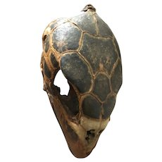 Antique Natural History Large Turtle Head