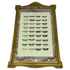 Original hand-colored print of butterflies or moths