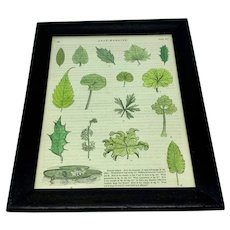 Original hand-colored print of leaf margins