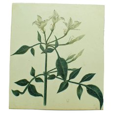 Antique Miniature Painting of White Flowers
