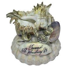 Seashell souvenir paperweight