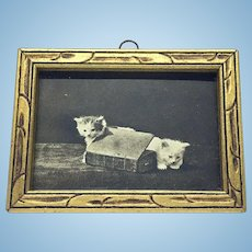 Miniature framed image of two kittens / cats with book