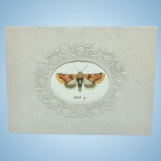 Antique hand colored moth in vintage embossed floral mat
