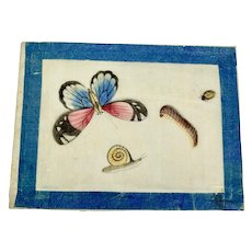 Pith painting of butterfly, caterpillar, snail, and bug
