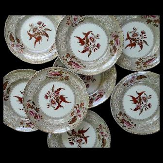 Eight Copeland Camilla Pattern Clobbered Transfer Printed Dinner Plates