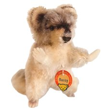 STEIFF RACCY RACOON 4310 1957;  Small Size - Brown Glass Eyes, Swivel Head, Mohair Body