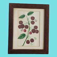 19th C. Victorian Folk Art Original Botanical Watercolor of Raspberries