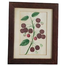 19th C. Victorian Folk Art Original Botanical Watercolor of Raspberries
