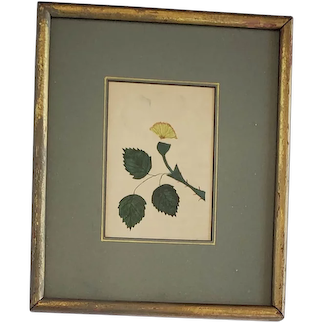 Diminutive 19th C. Folk Art Botanical Flower Watercolor