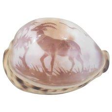 Vintage Folk Art Carved Cowrie Shell w/Ibex Design