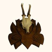 Vintage German Deer Antler Black Forest Wood Base With History