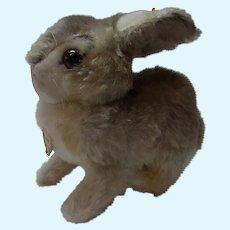 Vintage German Steiff Rabbit Bunny Pummy