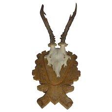 Vintage German Deer Antler Black Forest Wood Base