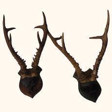 Two Large Stag Deer Antler Antique German