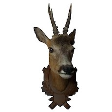 Vintage German Carved Wood Trophy Plaque for Taxidermy