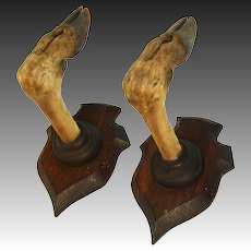Antique Victorian Era Black Forest Style Trophy Mount Pair, Gun Rack, Roe Deer Hooves