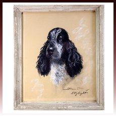 "Original Antique Pastel Portrait of a Dog, Spaniel, ""Skylight"" in Frame, Signed by Artist"