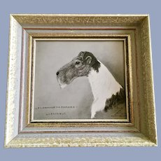 Foxterrier Zwinger Dog Show Portrait Florian of the Forces Clive Germany 1955