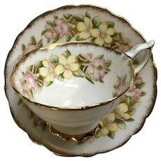 Royal Stafford Floral Cup & Saucer Bone China Orange Blossom