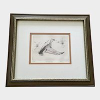 Steve Coulthard Mallard Duck in Flight Etching Limited Edition Print
