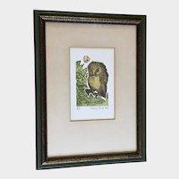 Nancy Nemec, Artist Proof Owl Colored Etching A/P Listed Artist Intaglio Print
