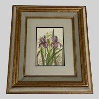 Linda Fast, Iris Still Life Watercolor Painting