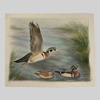 Marge Maret Wood Ducks in Pond Mixed Media Painting
