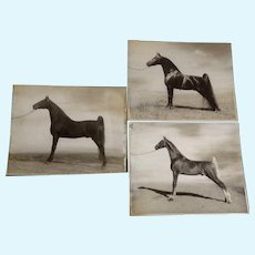 Launspach, Real Gaited Show Horses Photos on Board for Vintage Magazine 1955-1957