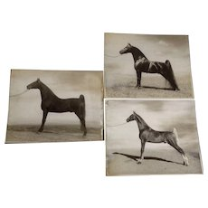 Launspach, Real Thoroughbred Race Horse Photos on Board for Vintage Magazine 1955-1957
