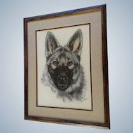 C Holly Merrifield, German Shepard Portrait Pastel Drawing Signed by Colorado Wildlife Artist