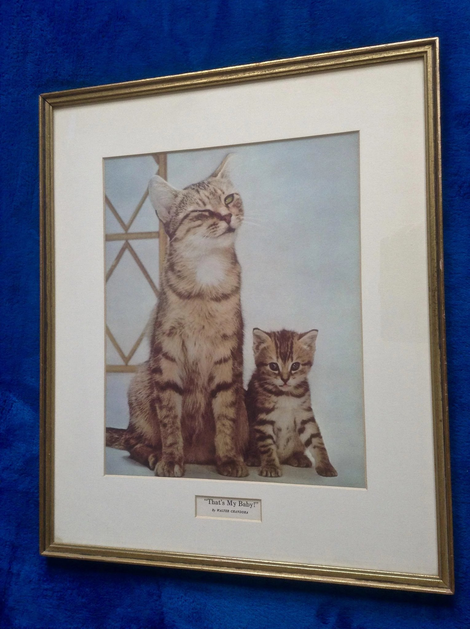 1960 S Walter Chandoha That S My Baby Cat Poster Framed