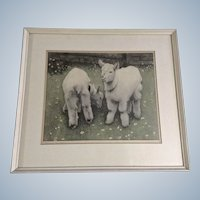 Baby White Goat Kids Vintage Colored Etching Figural Print Signed by Artist