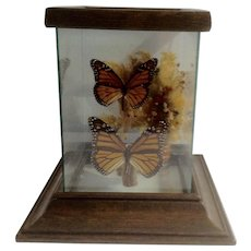 Vintage Butterfly Monarch Wings Terrarium Encased Professionally Mounted on Burl Driftwood with Glass Box Wood Stand