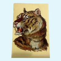 Victorian 1875-1880 Gorgeous Tiger Die-Cut Embossed Paper Scrap