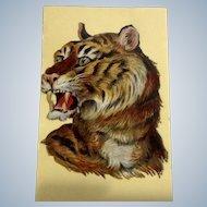 Victorian 1875-1880 Gorgeous Tiger Die-Cut Embossed Paper Scrap