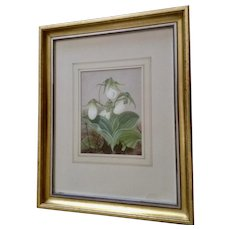 Hannah Lynde, American Painter (1807-1899), Antique Botanical White Flowers Watercolor Painting Signed by Listed Artist 1878