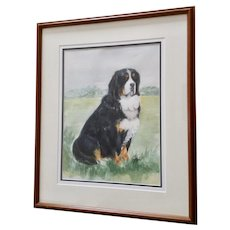 Bernese Mountain Dog In A Field Watercolor Painting Signed by Artist Cole