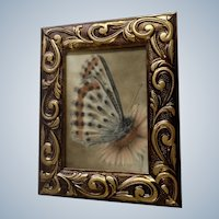 Loree Elf, Beautiful Moth Butterfly Original Realism Pastel Painting Signed By Artist