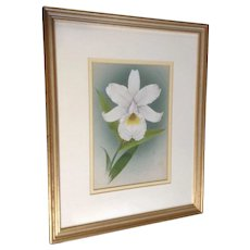 White Orchid Flower Still Life Watercolor Painting Unsigned England