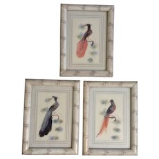 Vintage Feather Art Bird Paintings