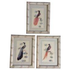 Vintage Feather Art Bird Paintings