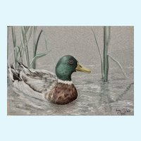 Terry O'Nele, Mallard Duck in Pond Reeds Mixed Media Painting