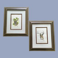 N Kauffman, Buck and Fawn Deer Bust Watercolor Paintings Signed by Artist