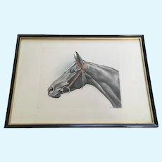 Black Horse Portrait Etching Print Aquatint Signed