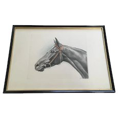 Black Horse Portrait Etching Print Aquatint Signed