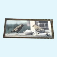 1940's Cute Little Birds Photograph Hand Tinted