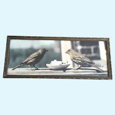 1940's Cute Little Birds Photograph Hand Tinted
