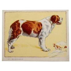 Gallaghers De Luxe Cigarettes  St. Bernard Dog Card  1934