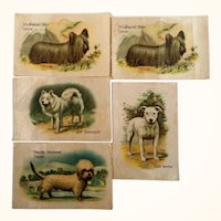 Cigarette Silks  Best Dogs Of Their Breed Lot of 5  1913