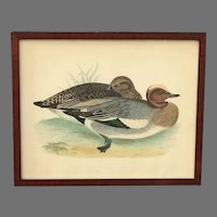 Antique Wigeon Litho by Benjamin Fawcett